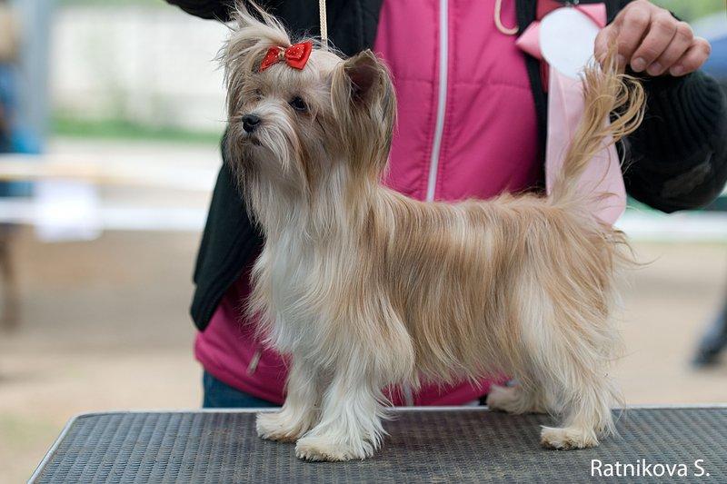 Новая порода декоративных собак