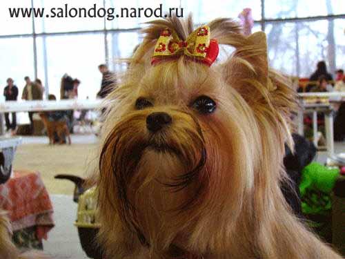 выставки собак на вднх: